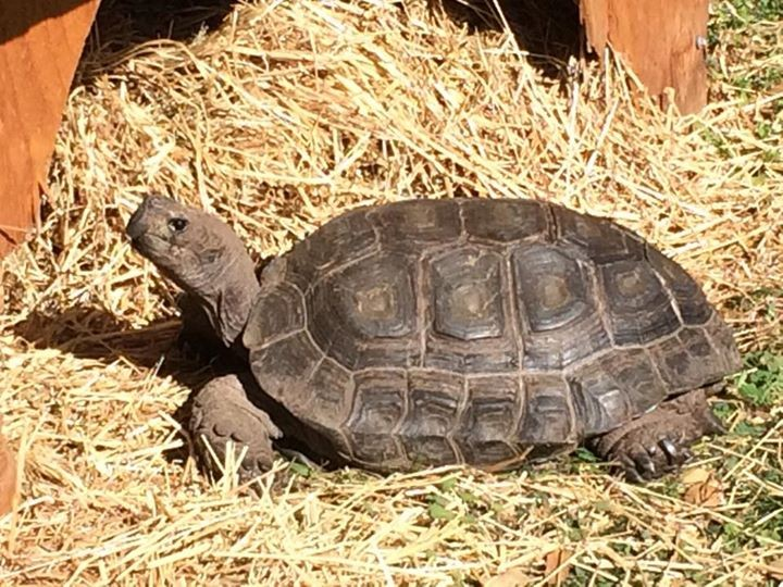 Tortoise Acres Rescue & Sanctuary, Non Profit Organizations