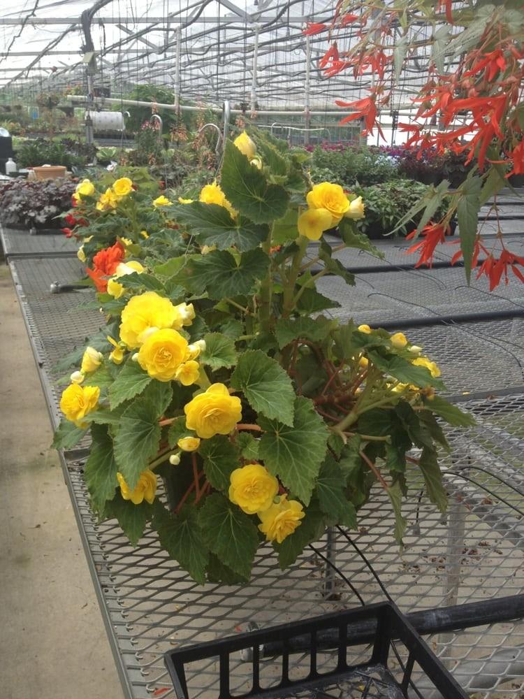 Blossom & Bloom Nursery & Greenhouses