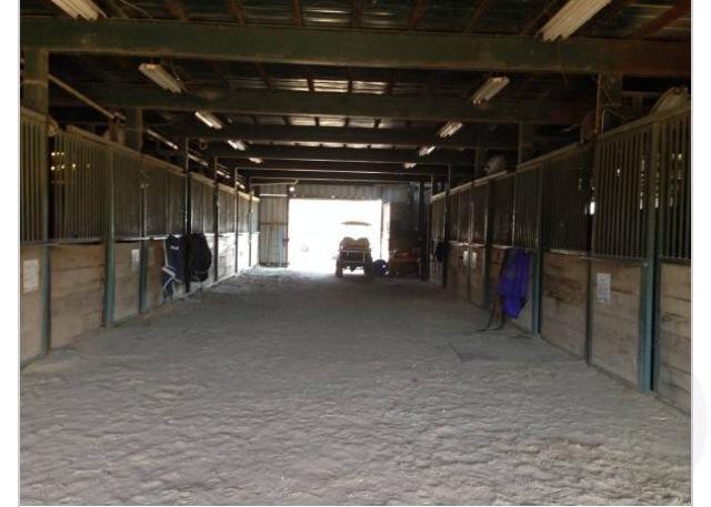 Piranha Performance Horses & Arena in Azle, meet the Owner, Logan
