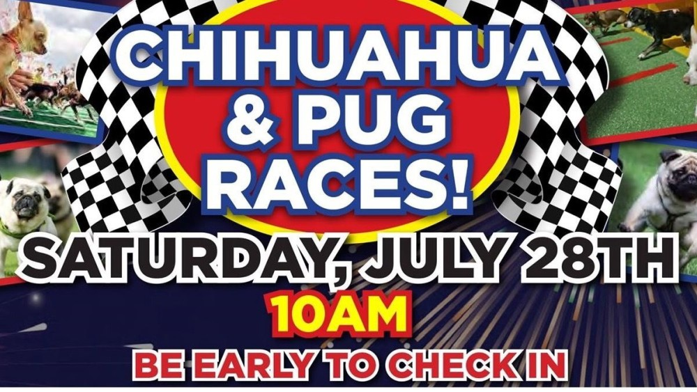 Pug Races At Mossy Toyota Dog Days Of Summer