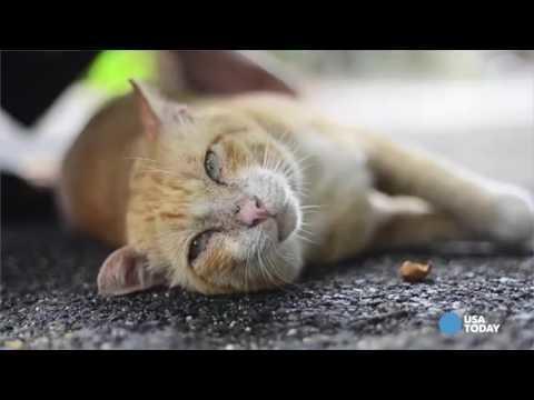 cat has blood in urine after antibiotics