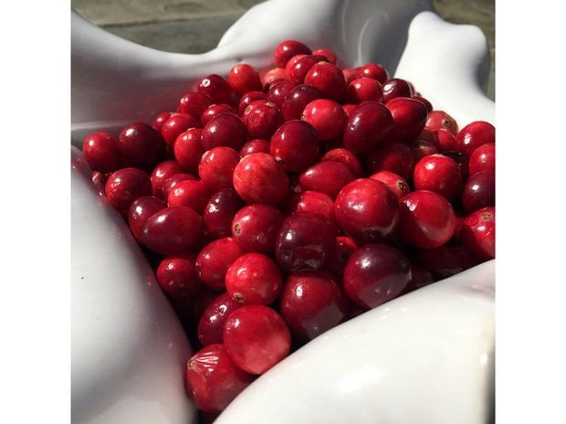 national cranberry initiative National cranberry cooperative essay 1088 words | 5 pages executive summary operations management introduction as a leader in the fruit industry, national cranberry cooperative (ncc) is ready to take on some changes in order to increase efficiency in its operation.