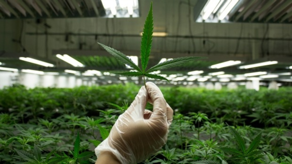 an introduction to the legalization of marijuana in california
