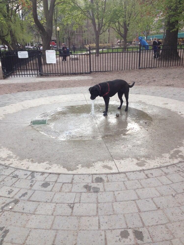 Dog Park @ Allen Gardens
