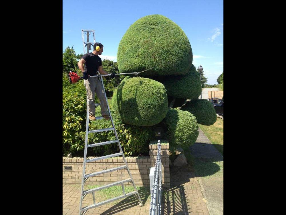 Aesthetic Tree & Hedge Service
