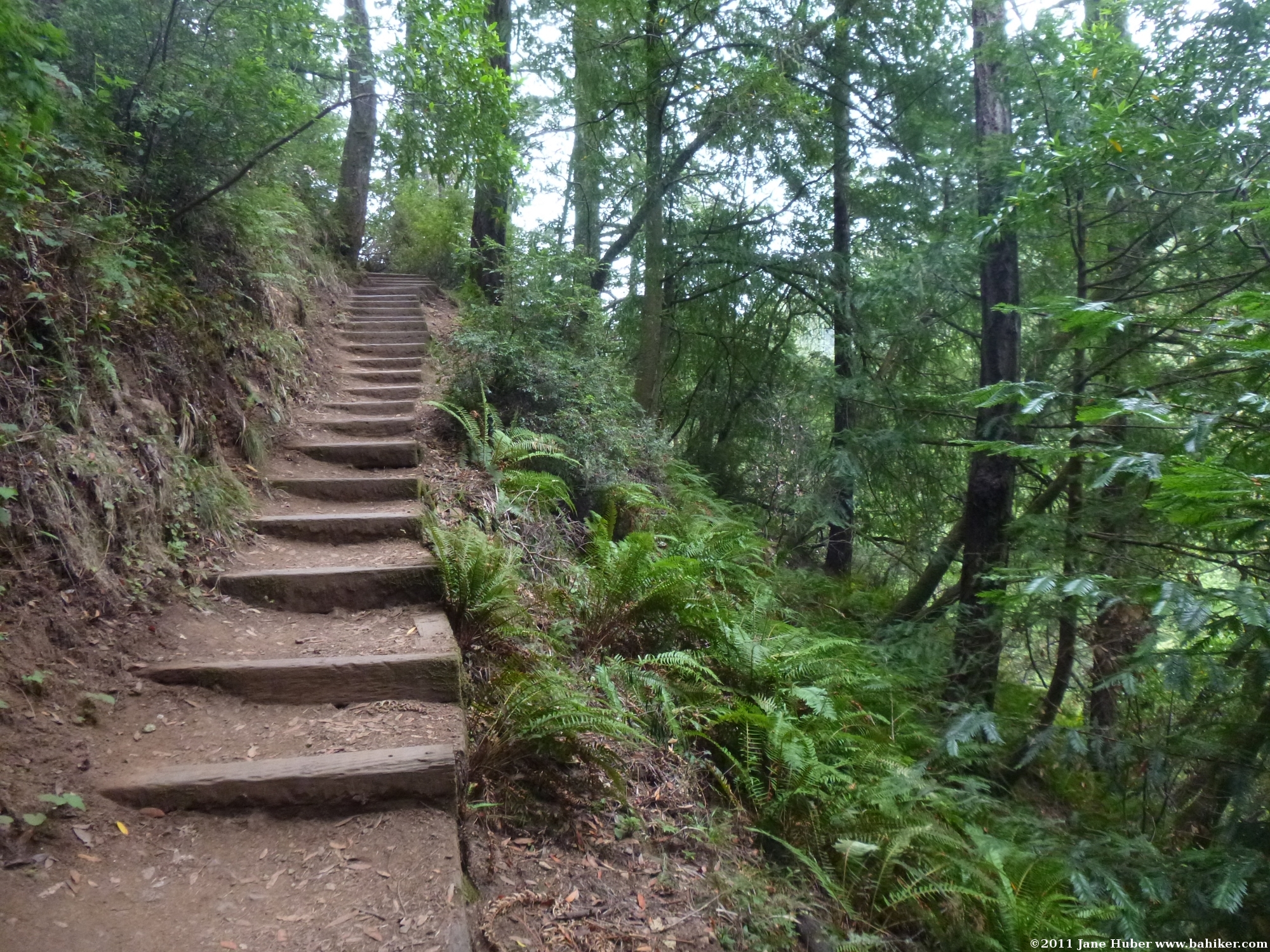 Hands Down The Most Popular Grouse Mountain Recreation Activity In Fall Spring Or Summer Is Grind Hiking Trail A Steep That Climbs