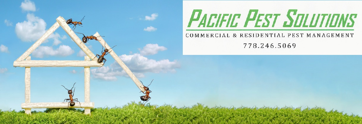 Pacific Pest Solutions